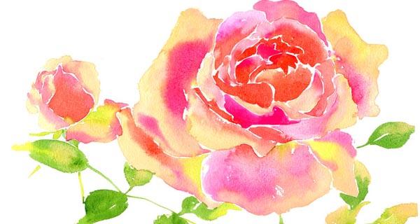 Gift Catalog - Rose